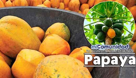 Propiedades Curativas Y Medicinales De La Papaya