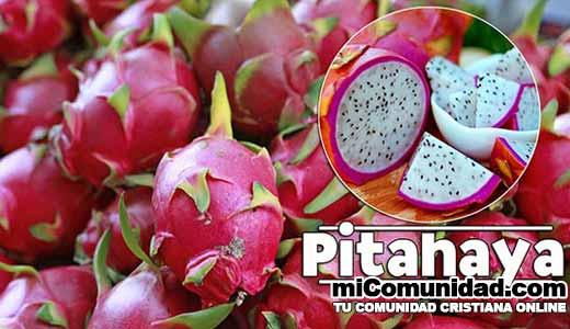 Propiedades Curativas Y Medicinales De La Pitahaya (Fruta De Dragón)