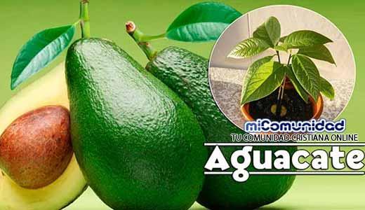 Propiedades Curativas Y Medicinales Del Aguacate