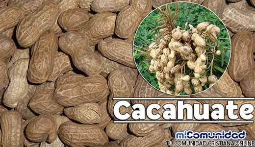 Propiedades Curativas Y Medicinales Del Cacahuate (Maní)