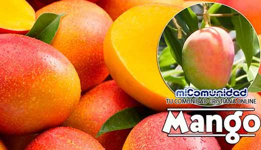 Propiedades Curativas Y Medicinales Del Mango
