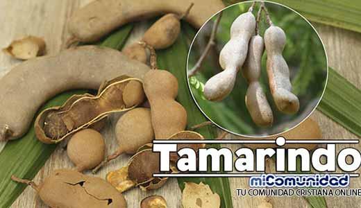 Propiedades Curativas Y Medicinales Del Tamarindo