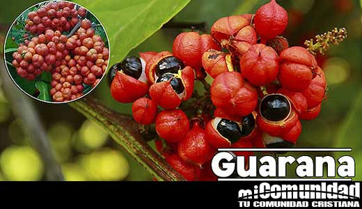 Propiedades curativas y medicinales del Guaraná
