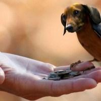 Aves con Cabeza De Perro ? mira estas 20 Divertidas Fotos te van a encantar