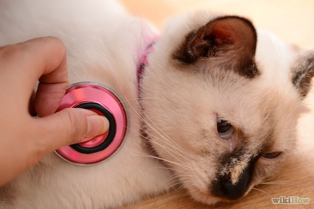 670px-Choose-the-Right-Kitten-for-Your-Home-Step-6