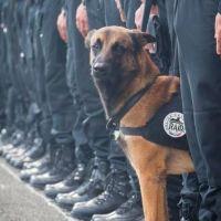 Este Perro Perdió Su Vida En París. Ahora El Mundo Lo Está Honrando De Una Manera Muy Especial.