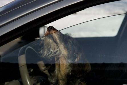 Tennesse-legaliza-romper-la-ventana-del-coche-para-rescatar-a-una-mascota-dentro-1-730x485