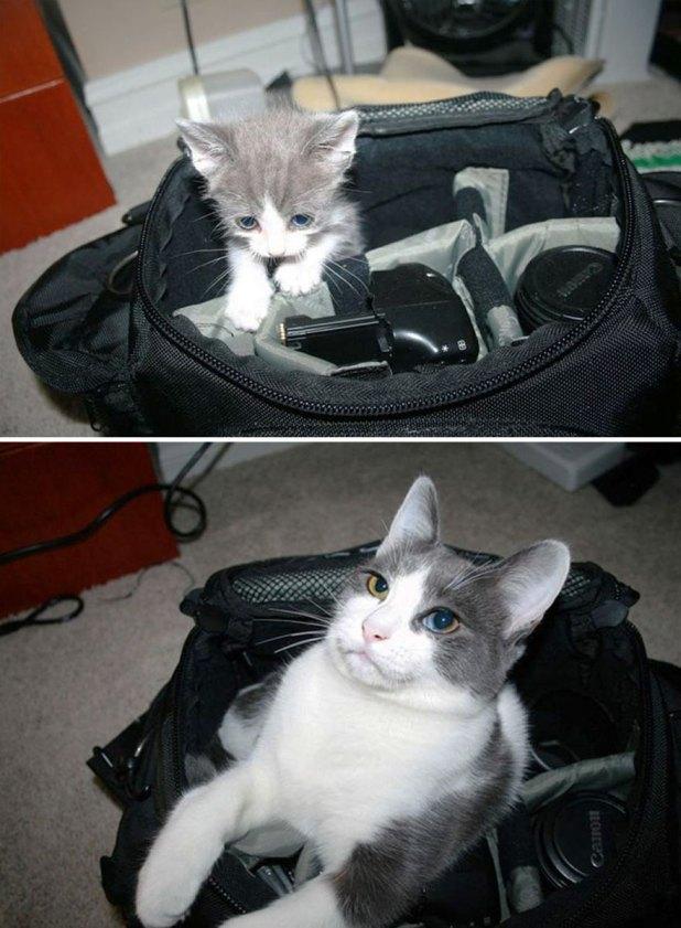 gatos-creciendo-antes-despues-1