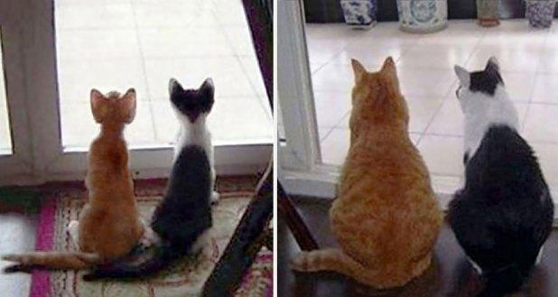 gatos-creciendo-antes-despues-17
