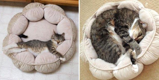 gatos-creciendo-antes-despues-4 (1)