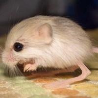 10 Mini Animales Que Son Adultos Y NO Podrás Creer Que Sean Reales