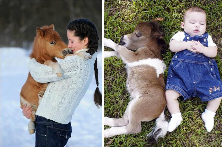14 Caballos En Miniatura Que te Enamoraran De Verdad