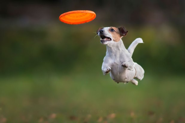 dogs-can-fly-11__880