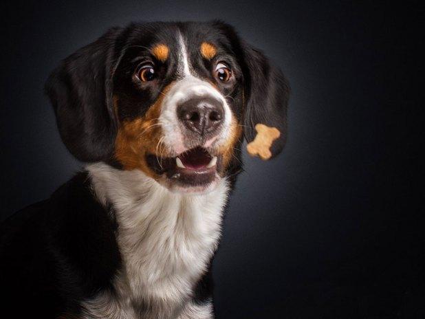 fotos-perros-expresiones-faciales-comida-christian-vieler-3
