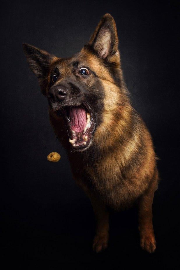 fotos-perros-expresiones-faciales-comida-christian-vieler-9