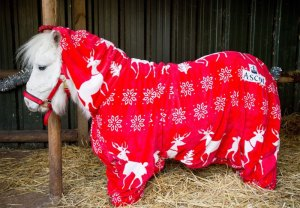 foursie-onesie-shetland-pony-daffy-10
