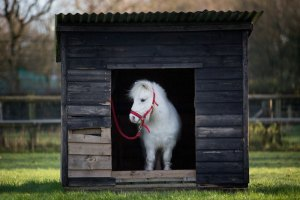 foursie-onesie-shetland-pony-daffy-7