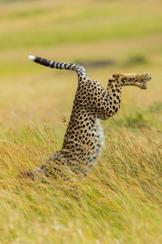 ganadores-premios-fotogradia-comedy-wildlife-2015-12