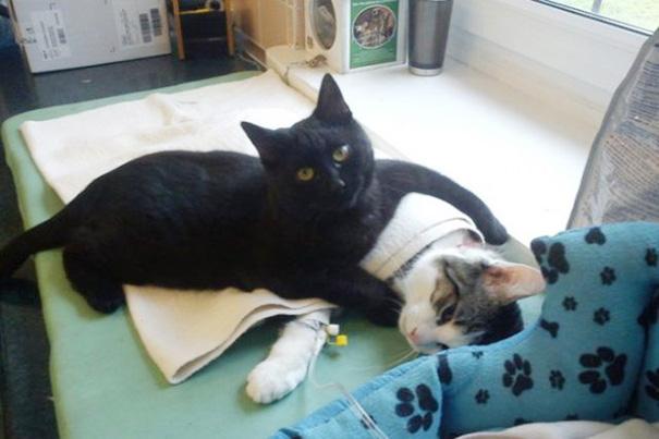 gato-enfermero-veterinario-refugio-animales-radamenes-polonia-1