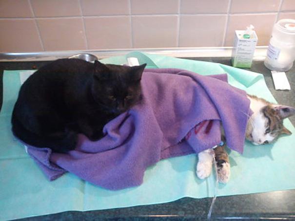 gato-enfermero-veterinario-refugio-animales-radamenes-polonia-3