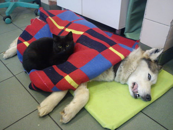 gato-enfermero-veterinario-refugio-animales-radamenes-polonia-4