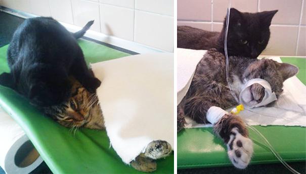 gato-enfermero-veterinario-refugio-animales-radamenes-polonia-6