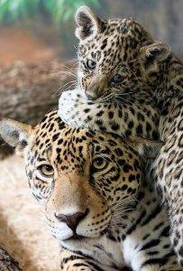 mamme-e-papà-animali-5ccef2c63dfeddf11e4e7fae78405079_650x