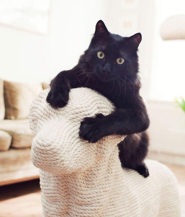 rascador-gatos-forma-perro-erik-stehmann-4