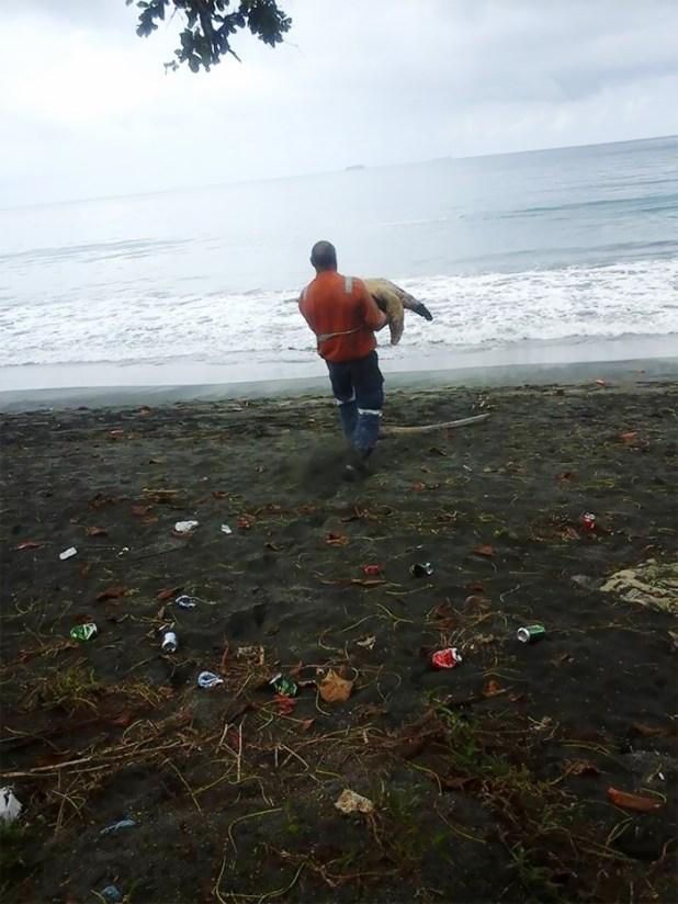 rescata-tortugas-marinas-arron-culling-papua-nueva-guinea-1
