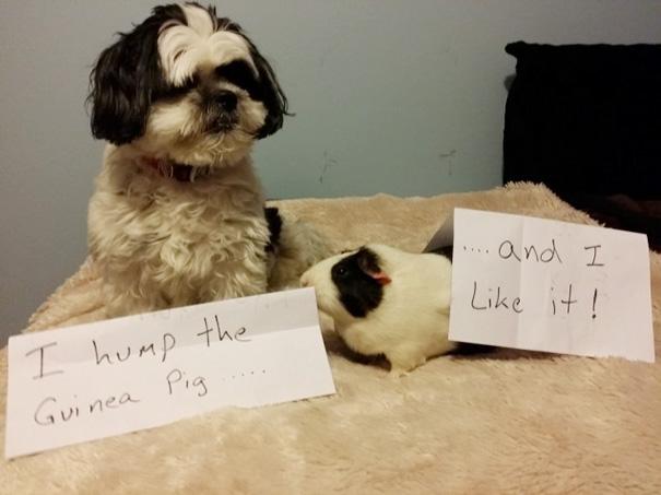 castigo-avergonzar-duos-animales-12