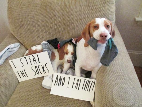 castigo-avergonzar-duos-animales-7