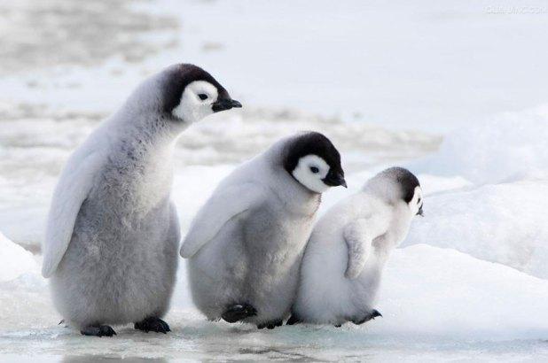 cutest-penguins-awareness-day-410__880