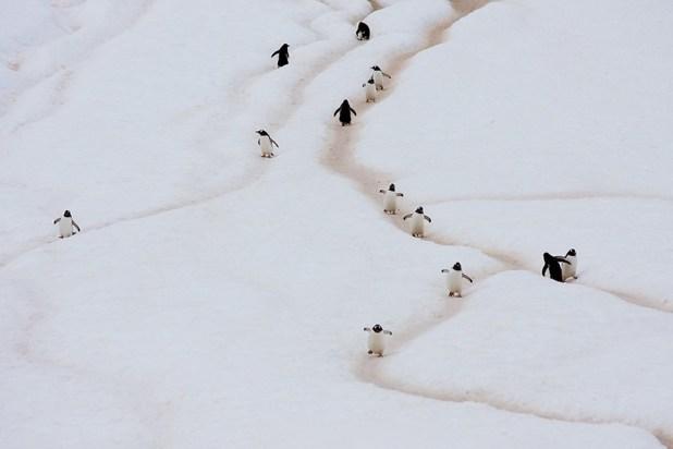 dia-concienciacion-pinguinos-1
