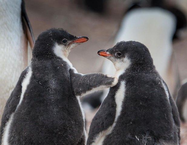 dia-concienciacion-pinguinos-13