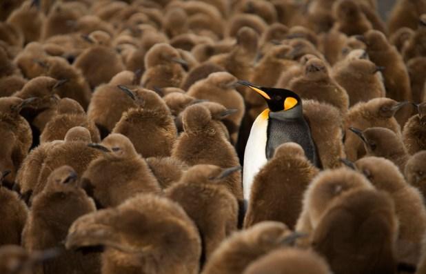 dia-concienciacion-pinguinos-2