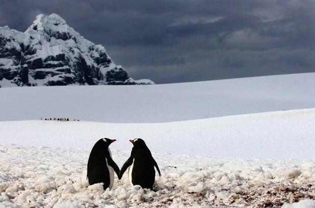 dia-concienciacion-pinguinos-20