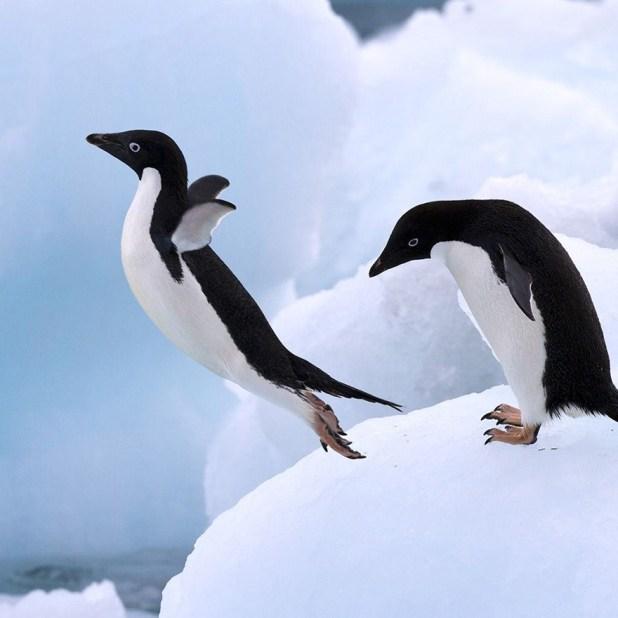 dia-concienciacion-pinguinos-35