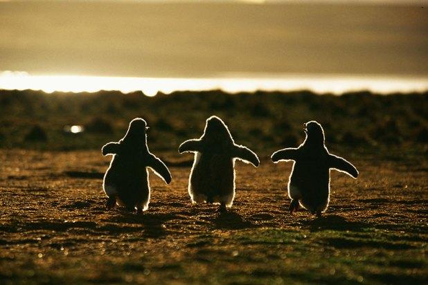dia-concienciacion-pinguinos-4