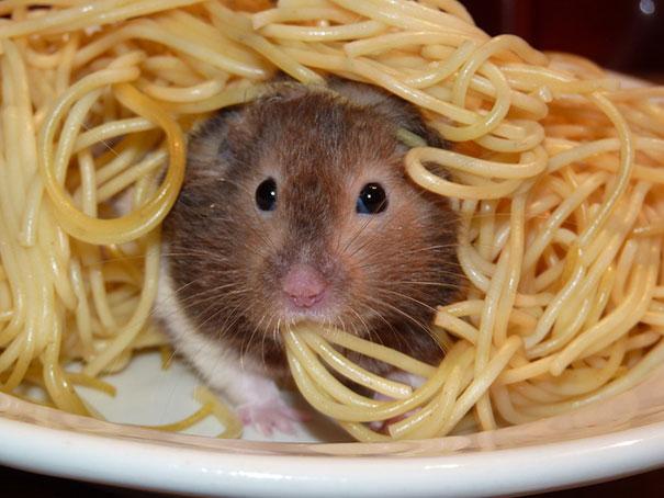 divertidos-animales-comiendo-8