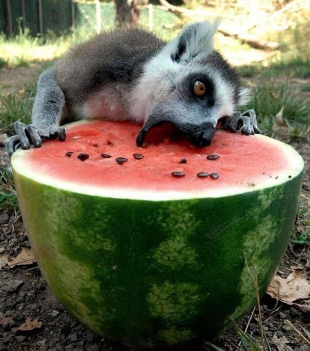 divertidos-animales-comiendo-9