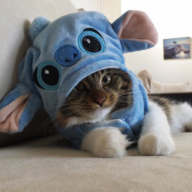 gato-rosie-amistad-3-perros-huskies-1