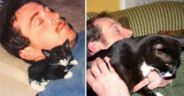 gatos-creciendo-antes-despues-11