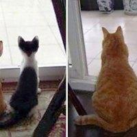 20 imagenes de antes y después de gatos creciendo.
