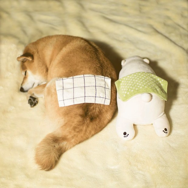 perro-shiba-inu-maru-dormir-igual-oso-peluche-9