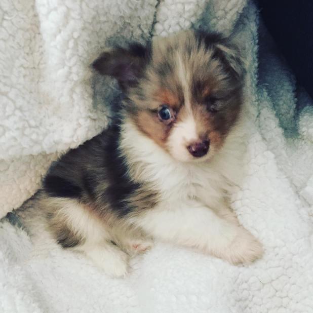 perro-tuerto-adoptado-jordan-trent-4