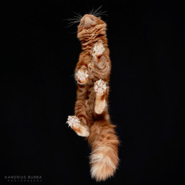 under-cats-fotos-gatos-debajo-andrius-burba-4