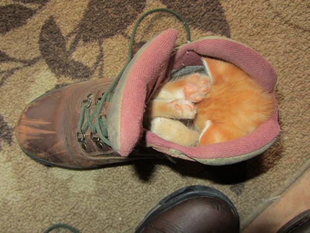 animales-durmiendo-cualquier-sitio-3