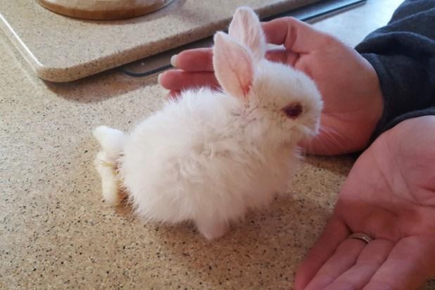 cria-conejo-paralitico-monopatin-wheelz-4