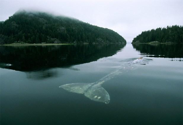 dia-mundial-ballenas-4
