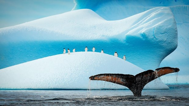 dia-mundial-ballenas-55